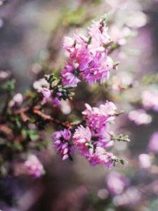 Heater è uno dei fiori di Bach, vengono descritti da Emanuela Re  alcuni utilizzi con i bambini. Consulenza a Torino e online