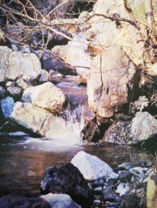 Rock Water è uno dei fiori di Bach, vengono descritti da Emanuela Re  alcuni utilizzi con i bambini. Consulenza a Torino e online