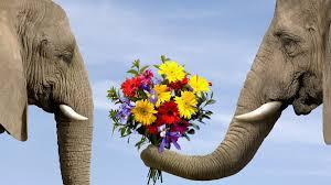 Liberarsi da credenza limitanti e condizionamenti per gli elefanti è difficile se non impossibile ma se una persona decide di volerlo fare, di cambiare la propria vita, grazie a Fiori di Bach e Australiani è possibile aiutarla a compiere il suo percorso di cambiamento della propria vita.