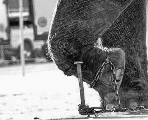I piccoli di elefante vengono condizionati per tutta la vita legandogli la zampa. Gli elefanti non riescono facilmente a liberarsi di questo condizionamento, gli esseri umani hanno qualche possibilità se lo vogliono, se decidono di volerlo fare.